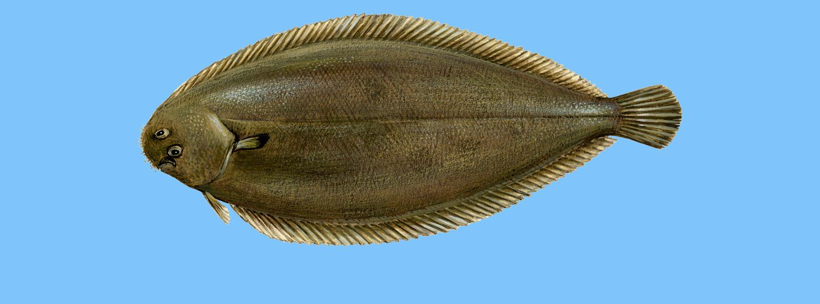 Etichettatura Del Pesce: Nome, Produzione, Cattura, Per Noi FAO 37