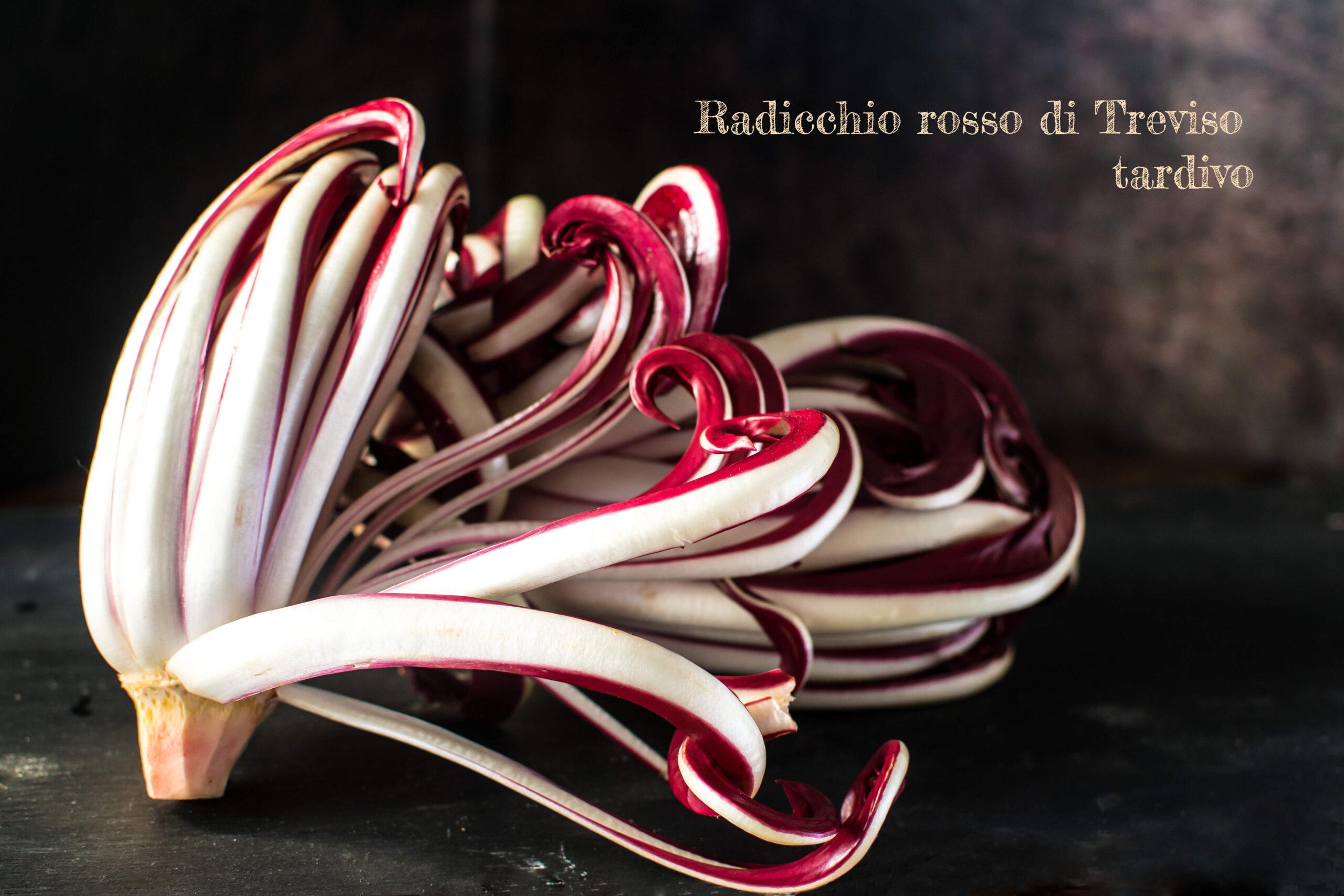 Radicchio Rosso Tardivo